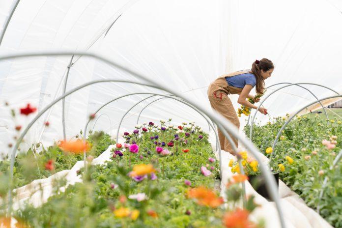 celebrities gardening covid-19 image